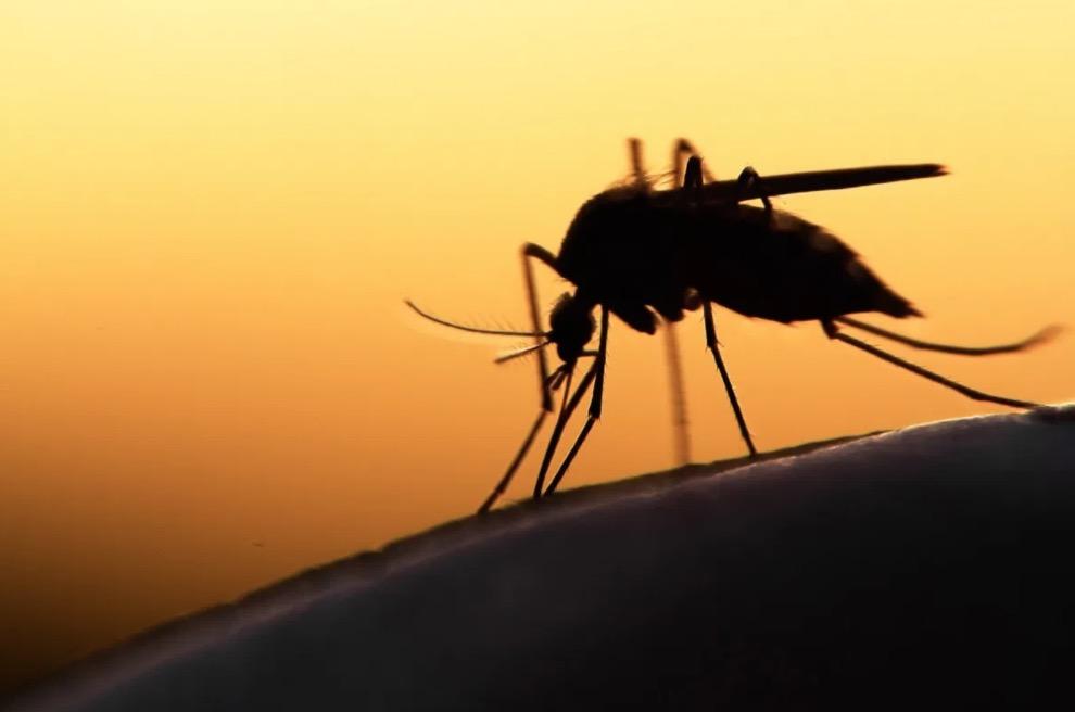 15 rumeurs à démystifier sur le Coronavirus-covid19-sante-intime-moustique